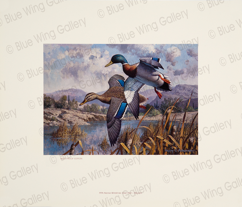1994 Arizona Waterfowl Stamp By Harry Curieux Adamson