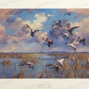 After The Storm - Pintails By Harry Curieux Adamson