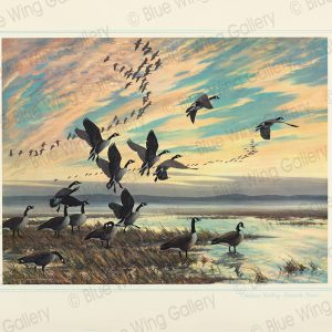 Autumn-Calling - Canada Geese By Harry Curieux Adamson
