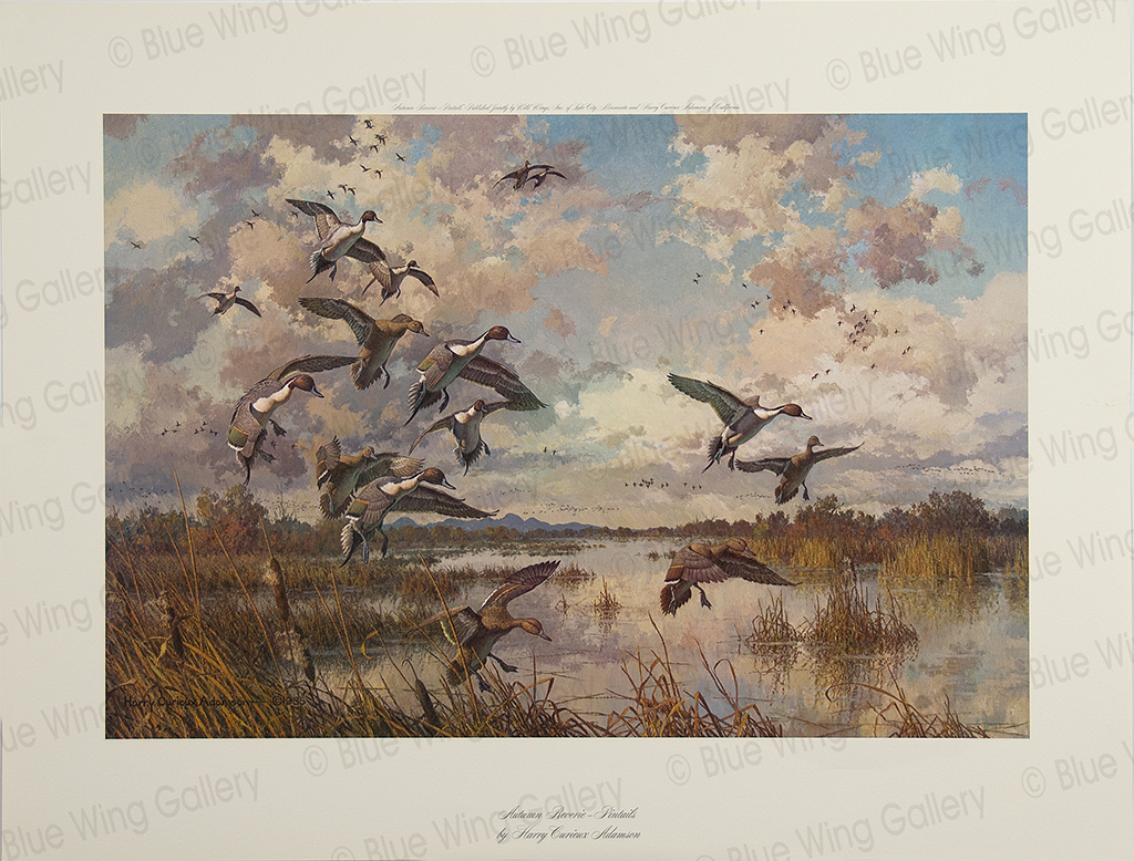 Autumn Reverie - Pintails By Harry Curieux Adamson
