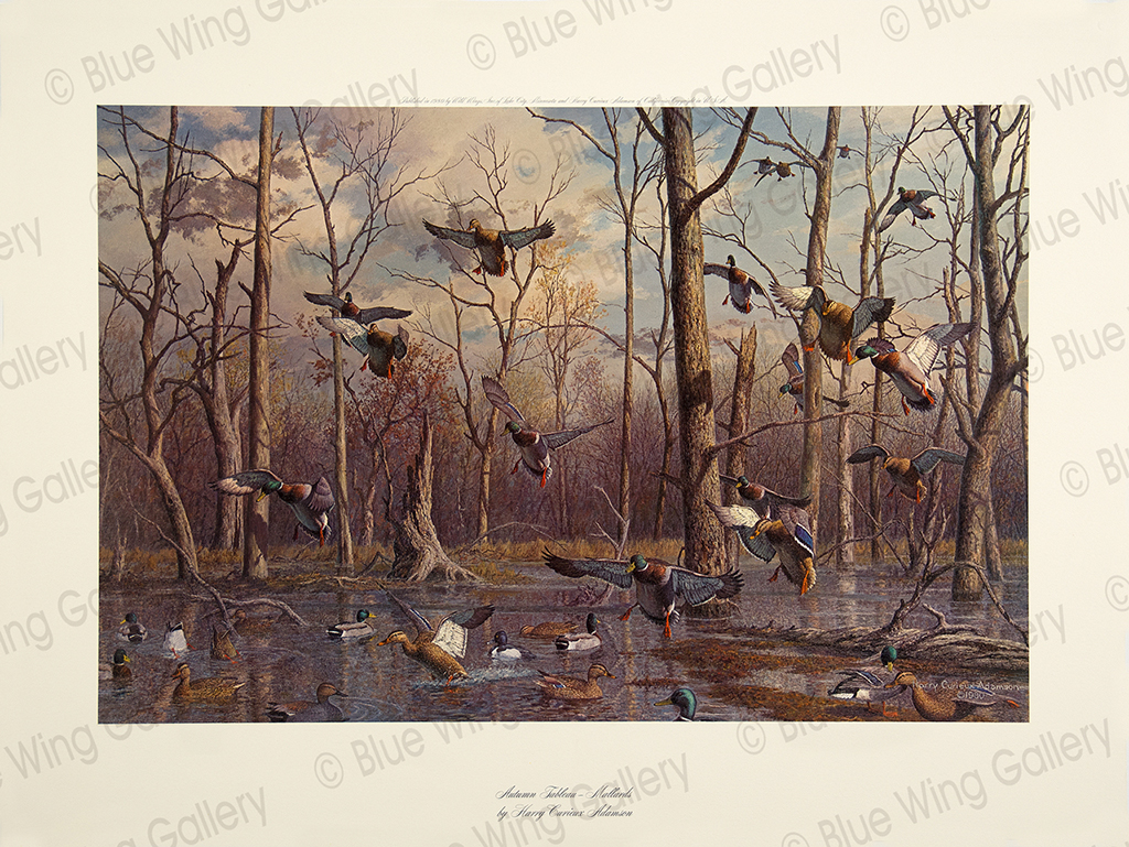 Autumn Tableau - Mallards By Harry Curieux Adamson