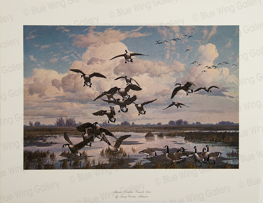 Autumn Eschelon - Canada-Geese By Harry Curieux Adamson