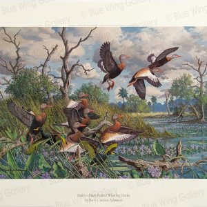 Ballet - Black Bellied Whistling-Ducks By Harry Curieux Adamson