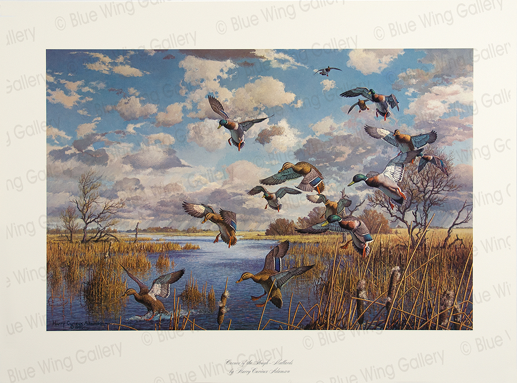 Corner of the Slough - Mallards By Harry Curieux Adamson