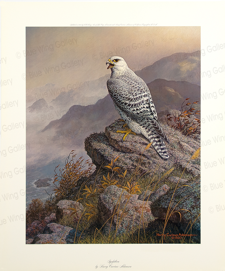 Corsair Gyrfalcon By Harry Curieux Adamson
