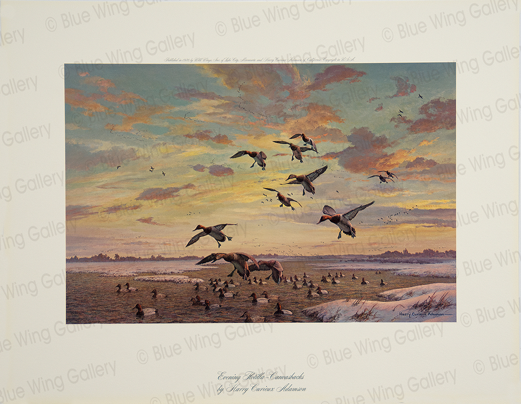 Evening Flotilla - Canvasbacks By Harry Curieux Adamson