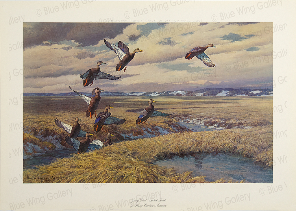 Jersey Coast - Black-Ducks By Harry Curieux Adamson