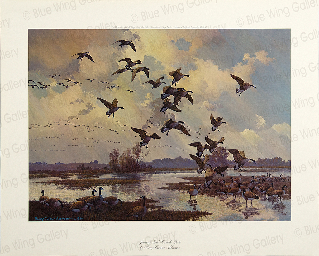 Journeys End - Canada Geese By Harry Curieux Adamson