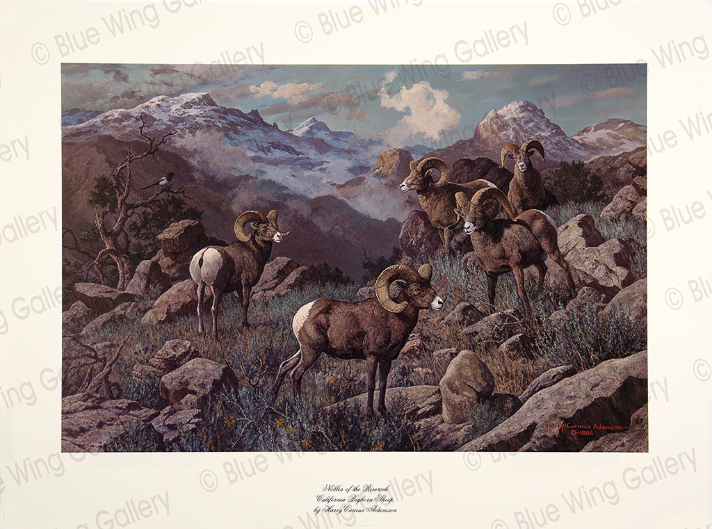 Nobles of the Rimrock - California Big Horn-Sheep By Harry Curieux Adamson