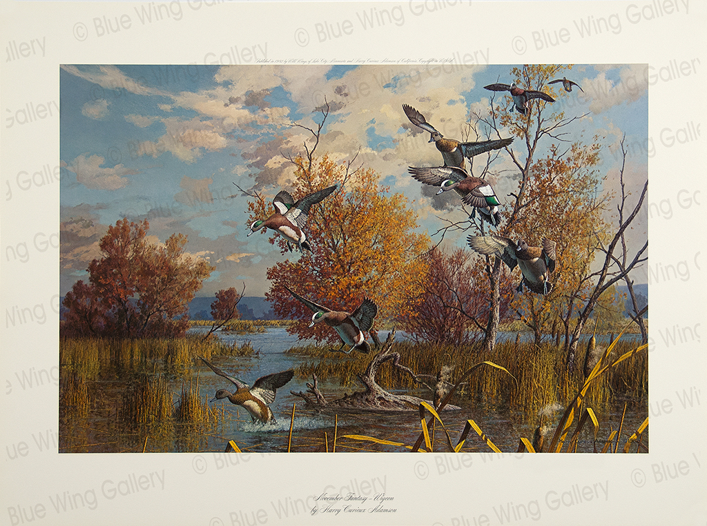 November Fantasy - Wigeon By Harry Curieux Adamson