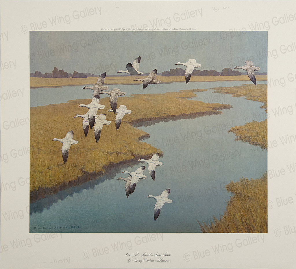 Over The Marsh - Snow Geese By Harry Curieux Adamson