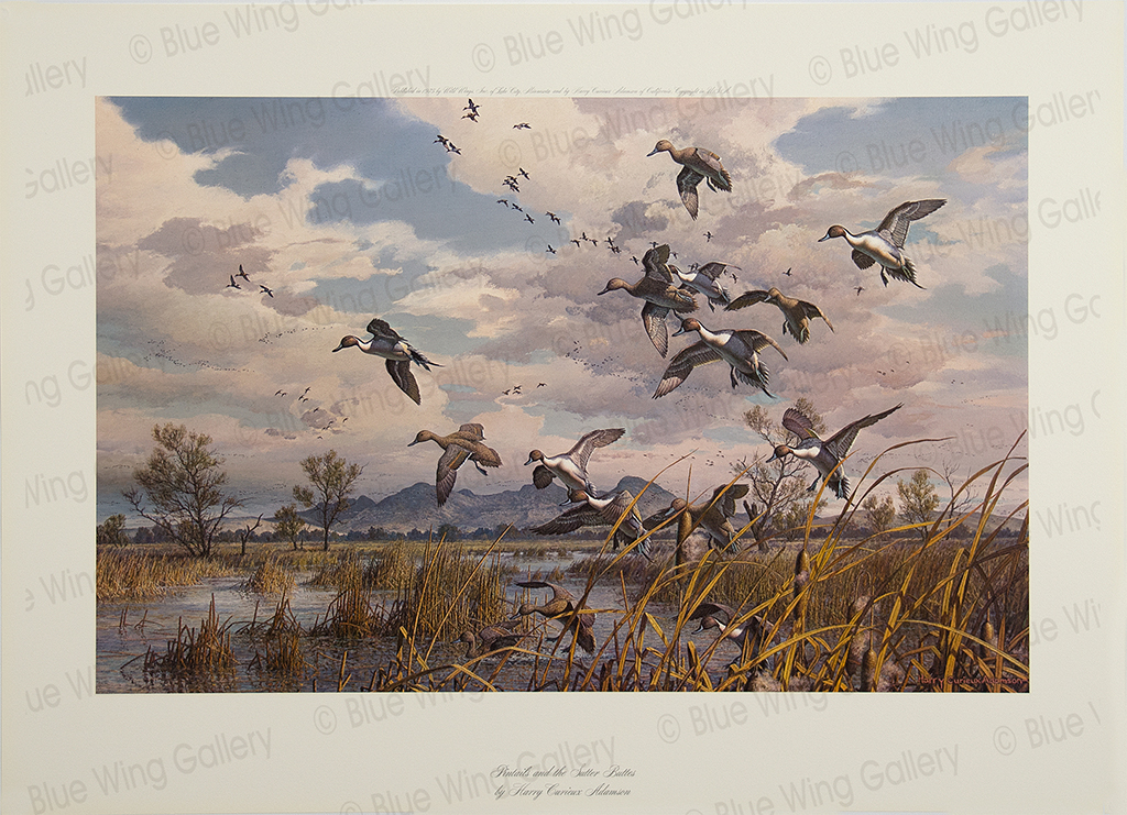 Pintails and the Sutter-Buttes By Harry Curieux Adamson