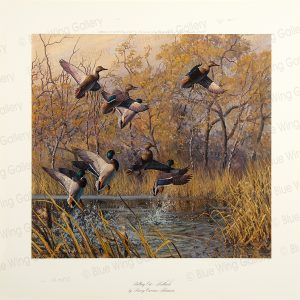 Pulling Out - Mallards By Harry Curieux Adamson