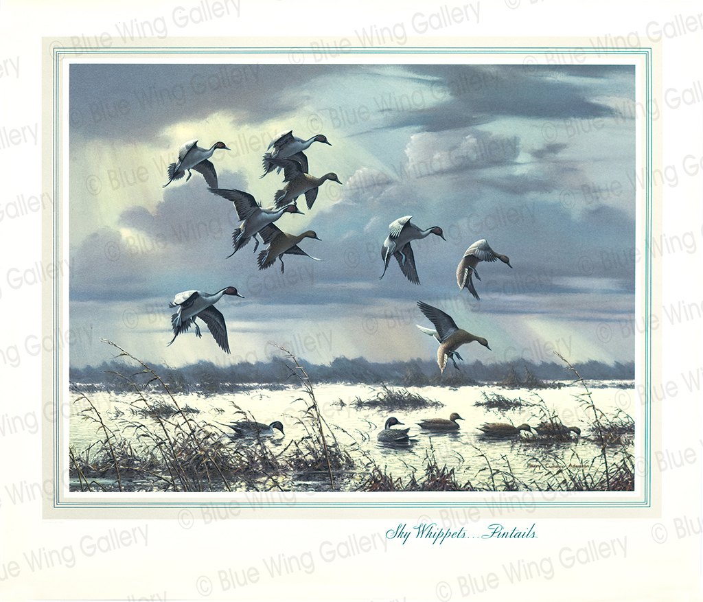 Sky Whippets - Pintails By Harry Curieux Adamson
