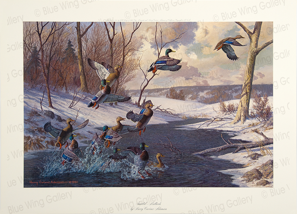 Startled Mallards By Harry Curieux Adamson