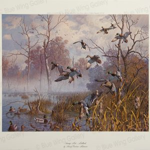 Swamp Mist - Mallards By Harry Curieux Adamson