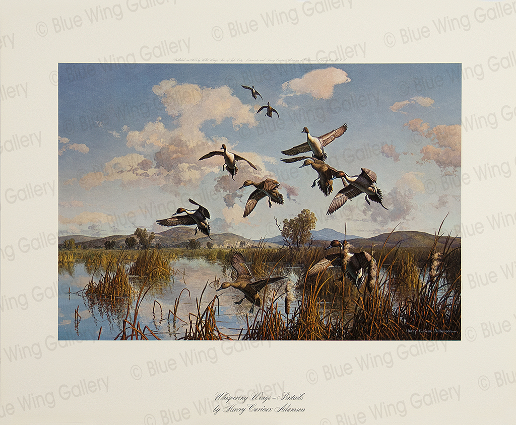 Whispering Wings - Pintails By Harry Curieux Adamson