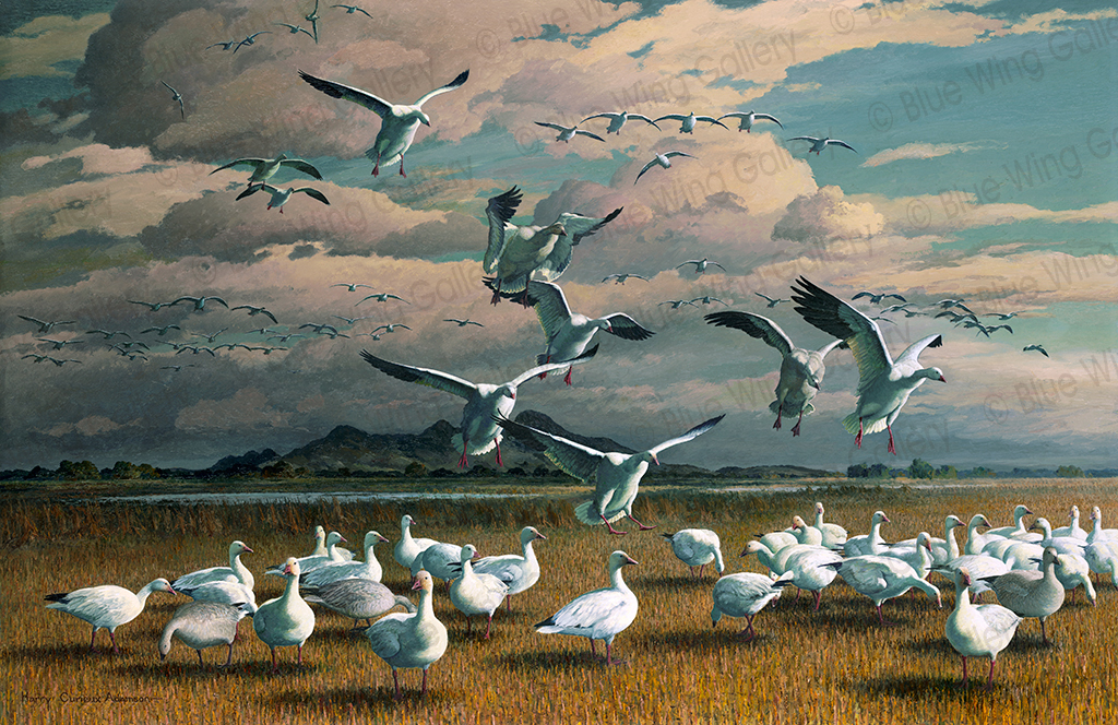 White Vanguard Snow Geese By Harry Curieux Adamson