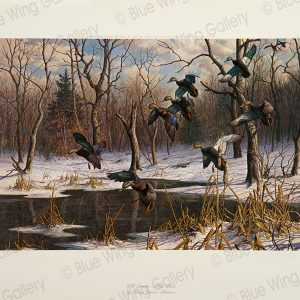 Wild-Bounty-Black-Ducks By Harry Curieux Adamson
