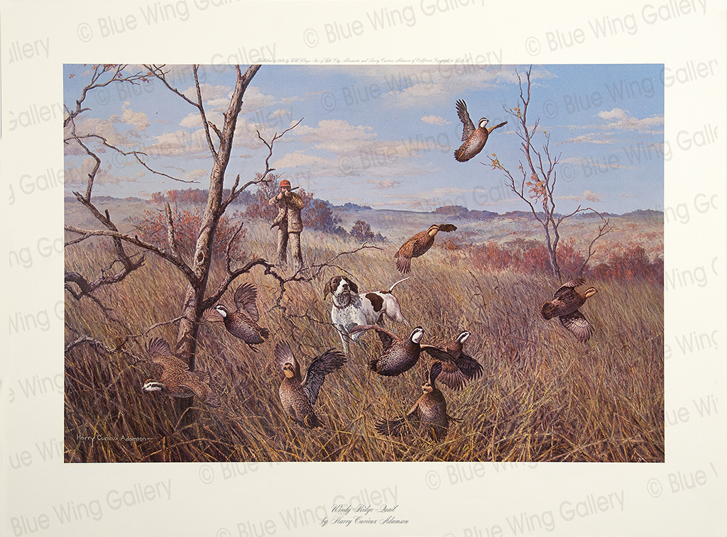 Windy Ridge - Quail By Harry Curieux Adamson