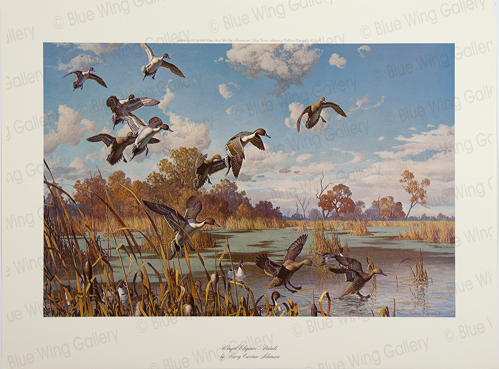 Winged Elegance - Pintails By Harry Curieux Adamson