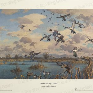 Winter Alchemy - Pintail By Harry Curieux Adamson