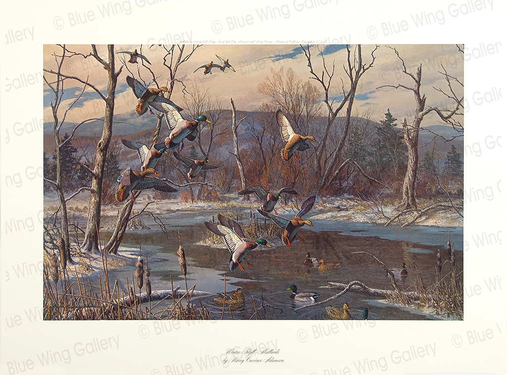 Winter Idyll - Mallards By Harry Curieux Adamson