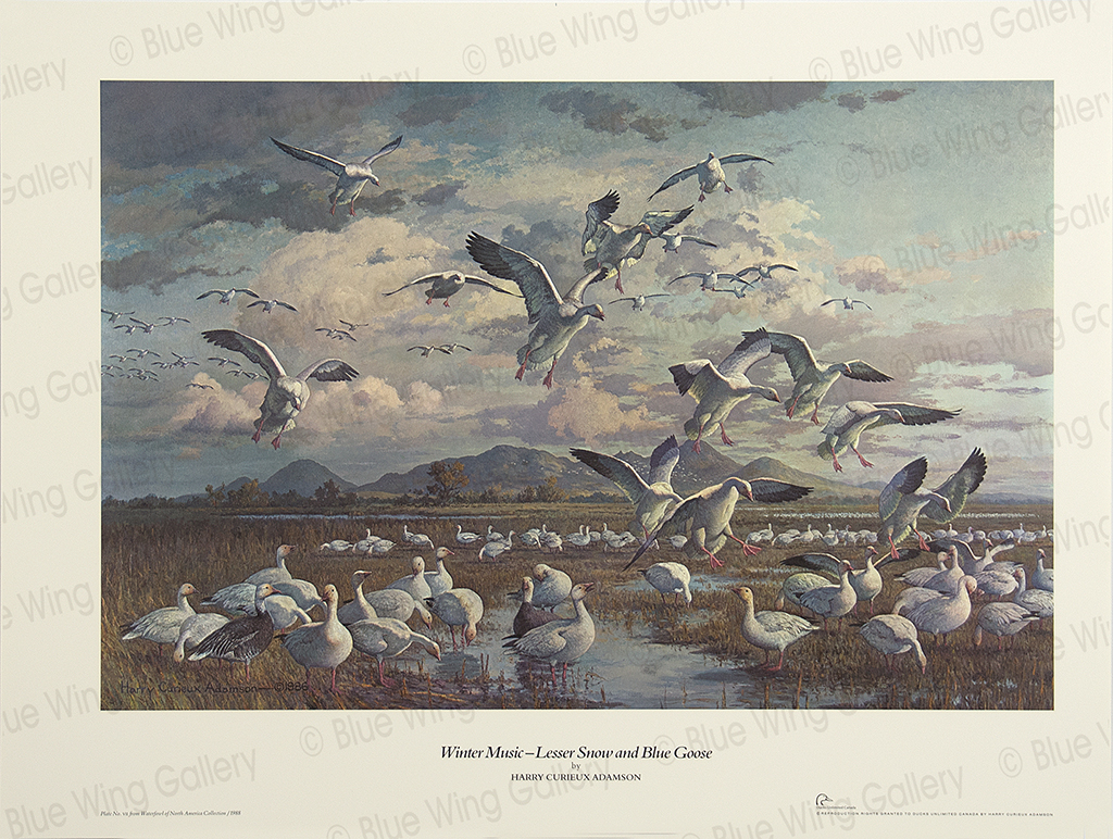 Winter Music - Lesser Snow and Blue Goose By Harry Curieux Adamson