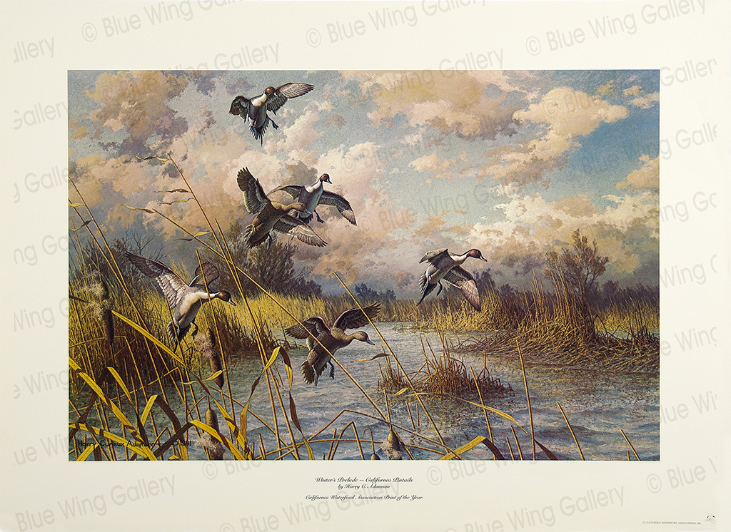 Winters Prelude - California-Pintails By Harry Curieux Adamson
