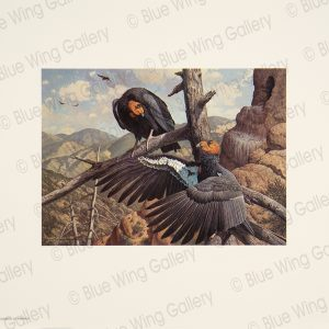 Spanning The Milennia - California-Condors By Harry Curieux Adamson